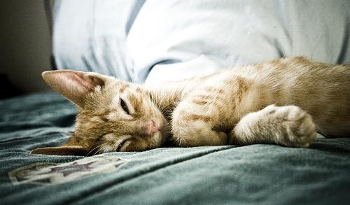 フリー画像| 動物写真| 哺乳類| ネコ科| 猫/ネコ| 寝顔/寝相/寝姿|