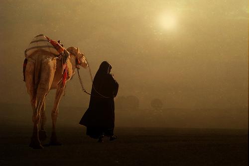 フリー画像| 人物写真| 一般ポートレイト| 後ろ姿| 動物写真| 哺乳類| ラクダ| 砂嵐| 旅人|