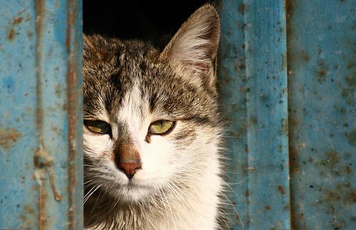 フリー画像| 動物写真| 哺乳類| ネコ科| 猫/ネコ| 覗く/見る|