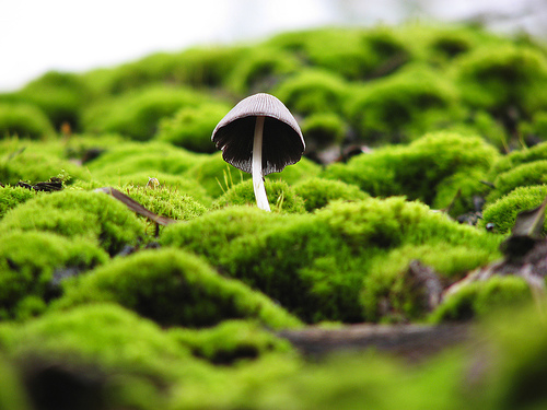 フリー画像| 植物| 茸/キノコ| 苔/コケ| 緑色/グリーン|