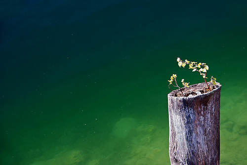 フリー画像| 自然風景| 樹木の風景| 湖の風景| 緑色/グリーン|