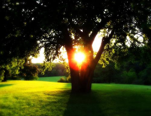 フリー画像  自然風景  樹木の風景  木漏れ日  太陽光線  緑色/グリーン 