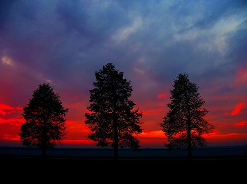 フリー画像| 自然風景| 樹木の風景| 夕日/夕焼け/夕暮れ| HDR画像|