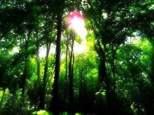 フリー画像| 自然風景| 森林/山林| 太陽光線| 木漏れ日| 緑色/グリーン| 樹木の風景|
