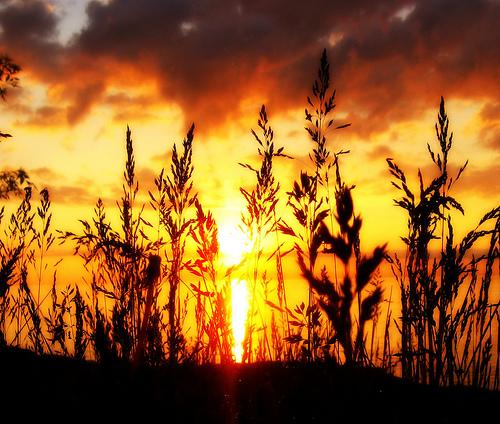 フリー画像| 自然風景| 夕日/夕焼け/夕暮れ| 草原の風景| シルエット| 橙色/オレンジ|