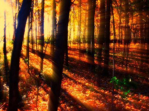 フリー画像| 自然風景| 森林/山林| 樹木の風景| 紅葉の風景| 太陽光線| 木漏れ日| 橙色/オレンジ| 秋の風景