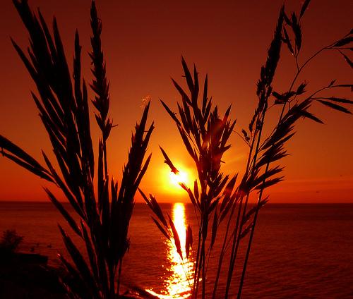 フリー画像| 自然風景| 湖の風景| 水平線/地平線| 朝日/朝焼け| 橙色/オレンジ| シルエット| アメリカ風景| ミシガン湖|