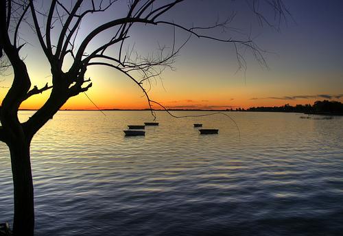 フリー画像| 自然風景| 湖の風景| 夕日/夕焼け/夕暮れ| 樹木の風景| アルゼンチン風景| ブエノスアイレス|