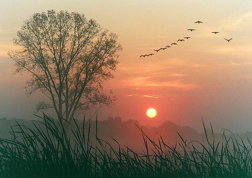 フリー画像| 自然風景| 空の風景| 樹木の風景| 草原の風景| 夕日/夕焼け/夕暮れ| 鳥類|