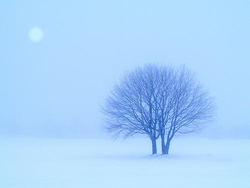 フリー画像| 自然風景| 樹木の風景| 雪景色| 白色/ホワイト|