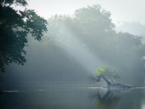フリー画像| 自然風景| 河川の風景| 太陽光線| 霧/靄| 樹木の風景| アメリカ風景| イリノイ州|