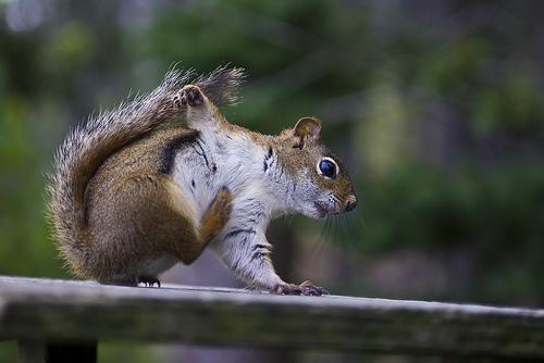 フリー画像|動物写真|哺乳類|リス科|小動物|リス|