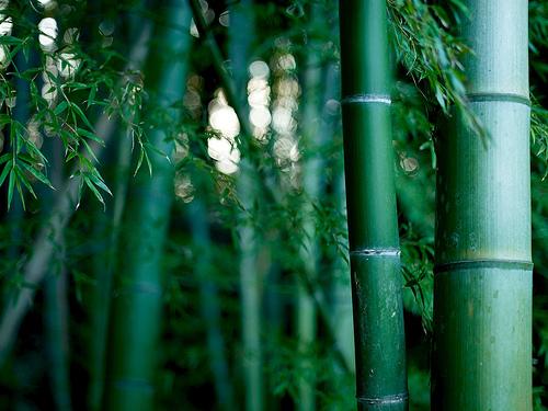 フリー画像| 自然風景| 竹林の風景| 竹/バンブー| 緑色/グリーン|