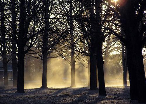 フリー画像| 自然風景| 樹木の風景| 霧/靄| 朝日/朝焼け|