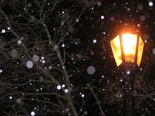 フリー画像| 人工風景| 街の風景| 街灯| 雪景色| 樹木の風景| 黒色/ブラック| 粉雪|