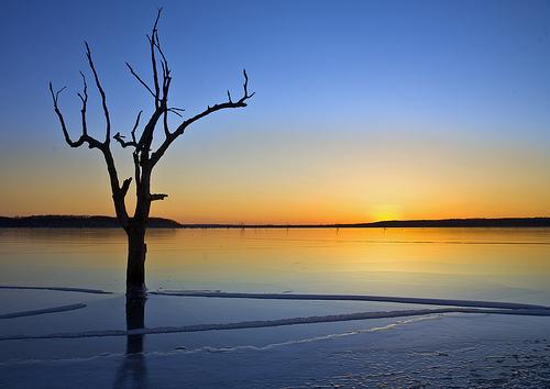 フリー画像| 自然風景| 湖の風景| 朝日/朝焼け| 樹木の風景| アメリカ風景|