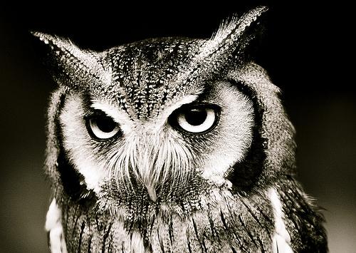 フリー画像| 動物写真| 鳥類| 猛禽類| 梟/フクロウ| コノハズク|