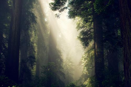 フリー画像| 自然風景| 森林/山林| 樹木の風景| 太陽光線| 木漏れ日|