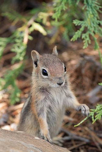 フリー画像| 動物写真| 哺乳類| リス科| 小動物| リス|