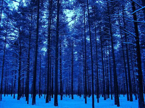 フリー画像| 自然風景| 森林/山林| 雪景色| 樹木の風景| 青色/ブルー|
