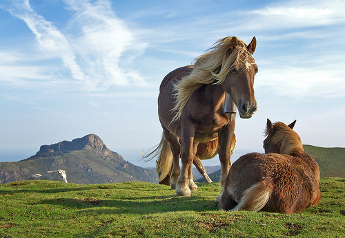 フリー画像| 動物写真| 哺乳類| 馬/ウマ| 恋人/カップル|