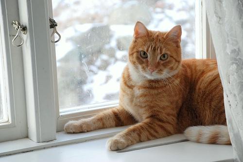 フリー画像| 動物写真| 哺乳類| ネコ科| 猫/ネコ| チャトラ|