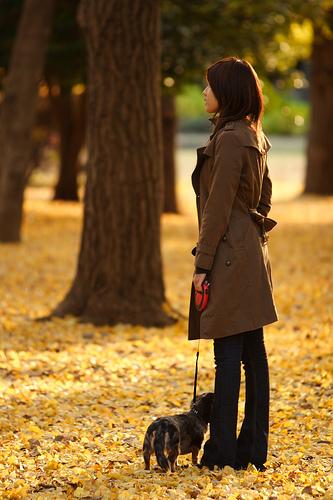 フリー画像| 人物写真| 女性ポートレイト| アジア女性| 銀杏/イチョウ| コート| ジーンズ| 落ち葉| ミニチュアダックスフンド|