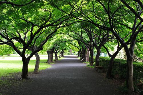 フリー画像| 人工風景| 道の風景| 並木道| 樹木の風景| 緑色/グリーン|