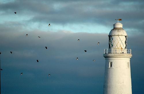 フリー画像| 人工風景| 建造物/建築物| 灯台/ライトハウス| 鳥類|