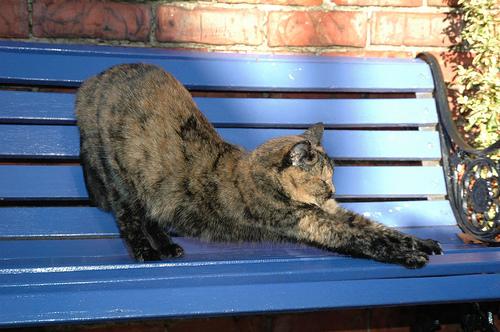 フリー画像| 動物写真| 哺乳類| ネコ科| 猫/ネコ| 背伸び/ストレッチ|