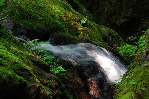フリー画像| 自然風景| 滝の風景| 森林/山林| 河川の風景| 緑色/グリーン| 日本風景|
