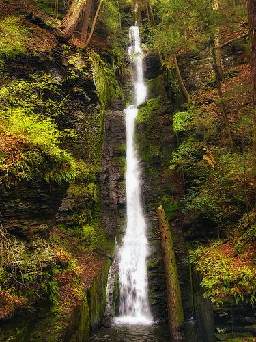 フリー画像  自然風景  滝の風景  森林/山林  アメリカ風景  ペンシルベニア 