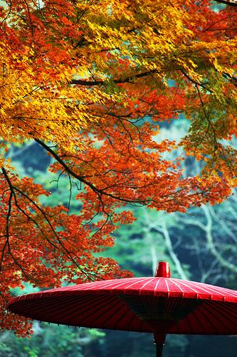 フリー画像|自然風景|紅葉の風景|赤色/レッド|日本風景|