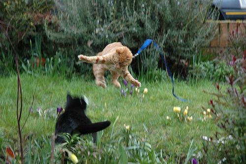 フリー画像| 動物写真| 哺乳類| ネコ科| 猫/ネコ| 跳ぶ/ジャンプ| 格闘/決闘| チャトラ|