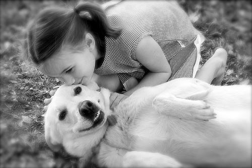 フリー画像| 動物写真| 哺乳類| イヌ科| 犬/イヌ| ゴールデン・レトリバー| キス/KISS| 人物写真| 子供ポートレイト| 少女/女の子| 外国の子供|