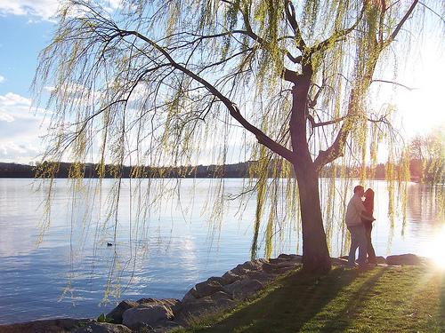 フリー画像| 人物写真| 一般ポートレイト| 恋人/カップル| 湖の風景| 樹木の風景| キス/KISS|