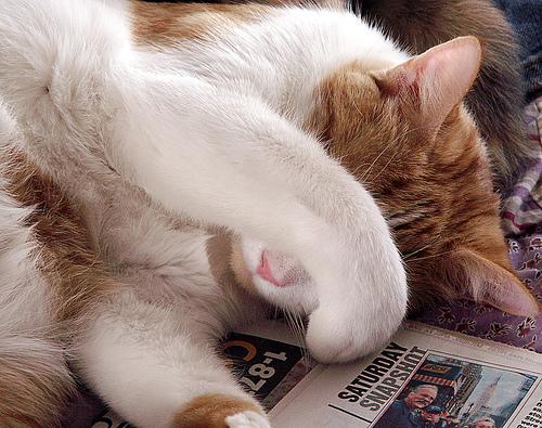 フリー画像| 動物写真| 哺乳類| ネコ科| 猫/ネコ| 目を覆う| チャトラ|