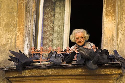 フリー画像| 人物写真| 一般ポートレイト| 老人/お年寄り| おばあさん/おばあちゃん|  鳥類| 鳩/ハト| 窓辺の風景|