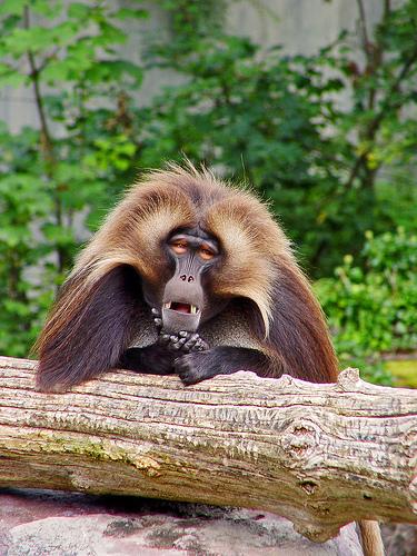 フリー画像| 動物写真| 哺乳類| 河馬/カバ| 親子/家族| 寝顔/寝相/寝姿|