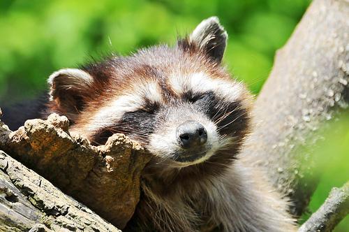 フリー画像| 動物写真| 哺乳類| リス科| プレリードッグ| 小動物|