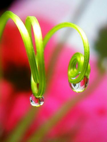 フリー画像| 植物| 蔓/ツル| 雫/水滴|