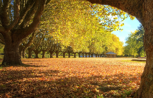 フリー画像| 自然風景| 紅葉の風景| 落ち葉| ドイツ風景| 黄色/イエロー|