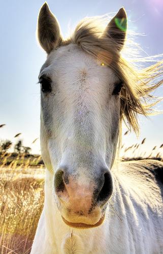 フリー画像| 動物写真| 哺乳類| 馬/ウマ|