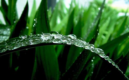 フリー画像| 植物| 葉っぱ| 雫/水滴| 緑色/グリーン|
