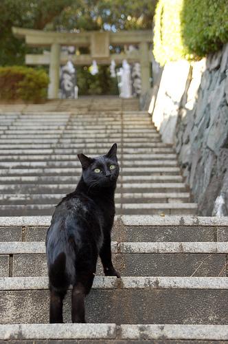 フリー画像| 動物写真| 哺乳類| ネコ科| 猫/ネコ| 黒猫|