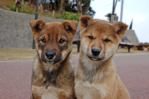 フリー画像| 動物写真| 哺乳類| イヌ科| 犬/イヌ| 兄弟/姉妹|