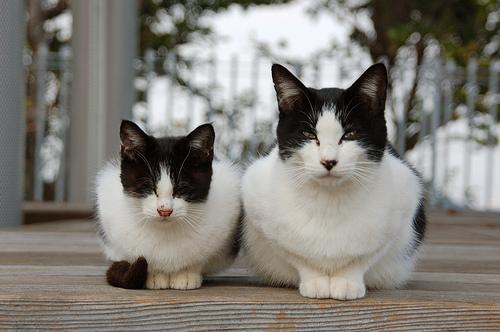 フリー画像| 動物写真| 哺乳類| ネコ科| 猫/ネコ| 親子/家族| 子猫|