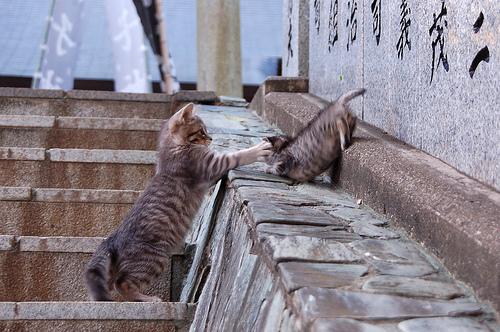 フリー画像| 動物写真| 哺乳類| ネコ科| 猫/ネコ| 子猫| 猫パンチ| サバトラ|