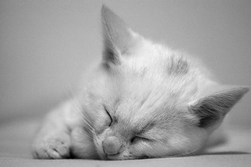 フリー画像| 動物写真| 哺乳類| ネコ科| 猫/ネコ| 子猫| 寝顔/寝相/寝姿| モノクロ写真|