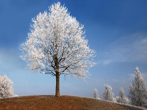 フリー画像| 自然風景| 樹木の風景| 雪景色|